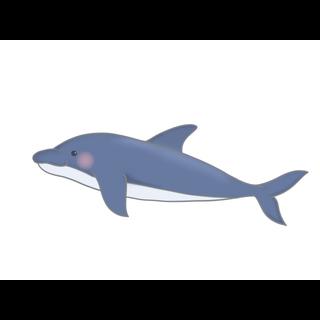 イルカ動画湖